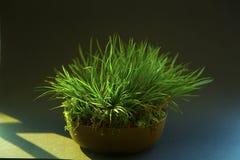 φυτά σε δοχείο Στοκ φωτογραφίες με δικαίωμα ελεύθερης χρήσης