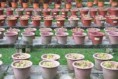 φυτά σε δοχείο Στοκ εικόνα με δικαίωμα ελεύθερης χρήσης