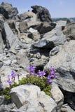 φυτά σταθερά Στοκ Εικόνα