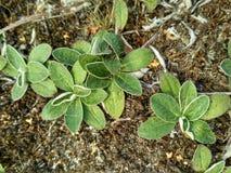Φυτά στην έρημο στοκ φωτογραφία