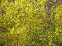 Φυτά στην έρημο Στοκ εικόνα με δικαίωμα ελεύθερης χρήσης
