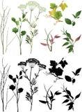 φυτά συλλογής Στοκ Εικόνα