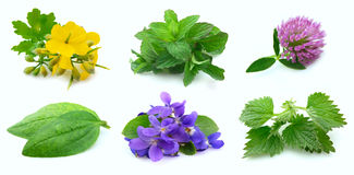 φυτά συλλογής Στοκ φωτογραφία με δικαίωμα ελεύθερης χρήσης