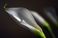 φυτά τρία Στοκ εικόνα με δικαίωμα ελεύθερης χρήσης