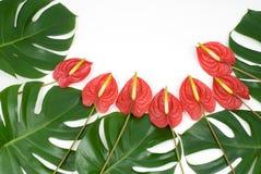 φυτά τροπικά Στοκ φωτογραφίες με δικαίωμα ελεύθερης χρήσης