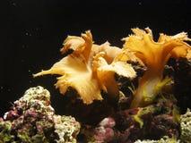 φυτά υποβρύχια Στοκ εικόνες με δικαίωμα ελεύθερης χρήσης