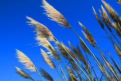 φυτά φτερών Στοκ φωτογραφία με δικαίωμα ελεύθερης χρήσης