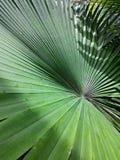 Φυτά φύλλων στον κήπο Στοκ φωτογραφίες με δικαίωμα ελεύθερης χρήσης