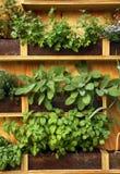 φυτά χορταριών Στοκ εικόνες με δικαίωμα ελεύθερης χρήσης