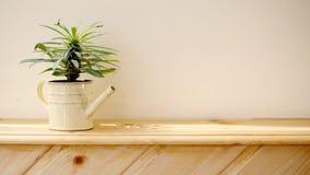 φυτά Στοκ Φωτογραφία