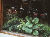φυτά στοκ εικόνες με δικαίωμα ελεύθερης χρήσης