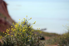 φυτά στοκ εικόνα με δικαίωμα ελεύθερης χρήσης