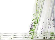 φυτά arabidopsis Στοκ φωτογραφία με δικαίωμα ελεύθερης χρήσης