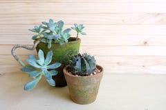 φυτά succulent Στοκ Εικόνες