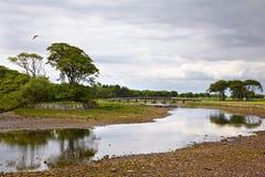 φυτίλι ποταμών Στοκ φωτογραφίες με δικαίωμα ελεύθερης χρήσης