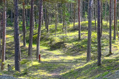 Φυτεία Δανία δική σου στοκ φωτογραφία με δικαίωμα ελεύθερης χρήσης