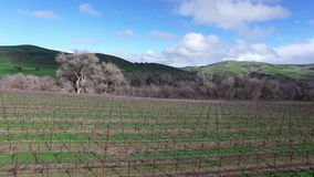 Φυτεία και όμορφα δέντρα που βλασταίνονται από το copter απόθεμα βίντεο
