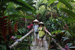 Φυτεία κακάου, καφέ και καρυκευμάτων στο χωριό Kalibaru στην ανατολική Ιάβα Ινδονησία Στοκ Εικόνα