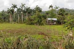 Φυτεία κακάου με βαθιά - πράσινα φύλλα και γραφείο με το ράφι αποθήκευσης στοκ φωτογραφία με δικαίωμα ελεύθερης χρήσης