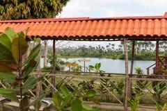 Φυτεία κακάου με τη λίμνη στο υπόβαθρο στοκ εικόνα με δικαίωμα ελεύθερης χρήσης
