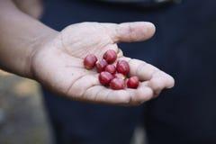 Φυτεία καφέ, Boquete, Παναμάς. Στοκ εικόνα με δικαίωμα ελεύθερης χρήσης