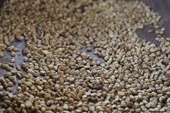 Φυτεία καφέ, Boquete, Panama12 Στοκ εικόνες με δικαίωμα ελεύθερης χρήσης