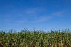 Φυτεία καλάμων ζάχαρης Στοκ φωτογραφίες με δικαίωμα ελεύθερης χρήσης
