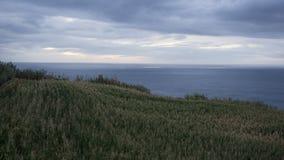 Φυτεία καλαμποκιού και τοπίο θάλασσας στο Σάο Miguel, Azore Στοκ Φωτογραφίες