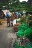 Φυτεία Κεράλα Ινδία τσαγιού Munnar πράσινη στοκ φωτογραφία με δικαίωμα ελεύθερης χρήσης