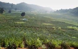 Φυτεία με την άσπρη διαδρομή στοκ εικόνες με δικαίωμα ελεύθερης χρήσης