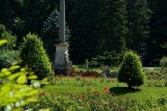Φυτεία με τριανταφυλλιές λεπτομέρειας στοκ εικόνα