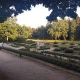 Φυτεία με τριανταφυλλιές Στοκ φωτογραφίες με δικαίωμα ελεύθερης χρήσης