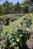 Φυτεία με τριανταφυλλιές TX του Tyler Στοκ φωτογραφία με δικαίωμα ελεύθερης χρήσης