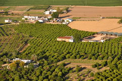 Φυτεία στη νότια Ισπανία Στοκ εικόνες με δικαίωμα ελεύθερης χρήσης