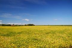 Φυτεία σόγιας Στοκ εικόνες με δικαίωμα ελεύθερης χρήσης