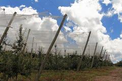Φυτεία της Apple στη Βραζιλία με την προστατευτική κάλυψη Στοκ Φωτογραφία