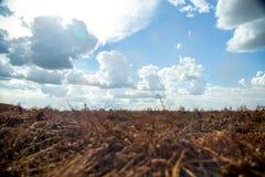 Φυτεία τρακτέρ φυστικιών Στοκ φωτογραφίες με δικαίωμα ελεύθερης χρήσης