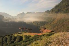 Φυτεία τσαγιού πρωινού στοκ φωτογραφίες