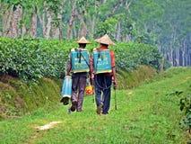 φυτεία τσαγιού σε Srimangal, Μπανγκλαντές στοκ φωτογραφίες