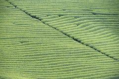 Φυτεία τσαγιού στο Βιετνάμ Στοκ φωτογραφία με δικαίωμα ελεύθερης χρήσης