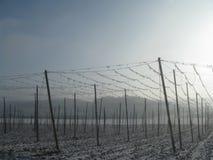 Φυτεία λυκίσκου στη Δημοκρατία χειμερινού ελέγχου στοκ εικόνες