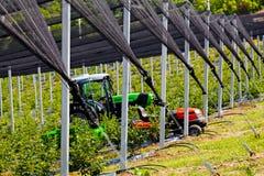 φυτείες βακκινίων με τη μηχανοποίηση Στοκ εικόνα με δικαίωμα ελεύθερης χρήσης