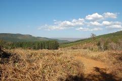 Φυτείες δέντρων σε Mpumalanga, Νότια Αφρική Στοκ φωτογραφία με δικαίωμα ελεύθερης χρήσης
