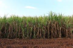 Φυτείες ζαχαροκάλαμων στοκ εικόνες με δικαίωμα ελεύθερης χρήσης