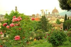 Φυτείες με τριανταφυλλιές στην πόλη της Φλωρεντίας, Ιταλία Στοκ Φωτογραφία