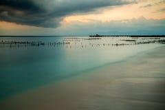 Φυτείες του φυκιού, άλγη at low tide Στοκ φωτογραφίες με δικαίωμα ελεύθερης χρήσης