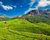 Φυτείες τσαγιού, Munnar, κράτος του Κεράλα, Ινδία Στοκ εικόνες με δικαίωμα ελεύθερης χρήσης