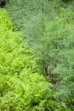 Φυτευμένος μαϊντανός στοκ εικόνα με δικαίωμα ελεύθερης χρήσης