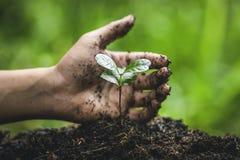 Φυτεψτε ένα πότισμα δέντρων στη φύτευση χεριών φύσης στοκ εικόνα