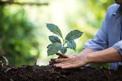 Φυτεψτε τα σπορόφυτα ενός δέντρων φυσικού υποβάθρου εγκαταστάσεων καφέ πράσινο σε φρέσκο φύσης Στοκ φωτογραφίες με δικαίωμα ελεύθερης χρήσης